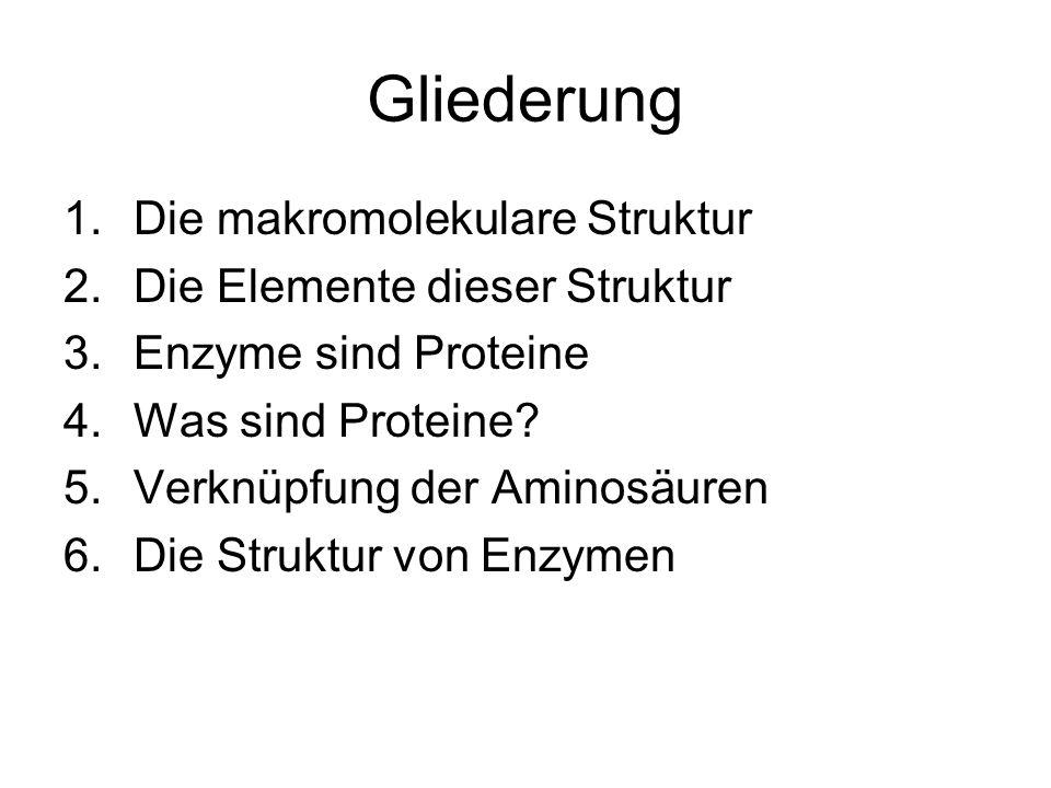 Gliederung 1.Die makromolekulare Struktur 2.Die Elemente dieser Struktur 3.Enzyme sind Proteine 4.Was sind Proteine? 5.Verknüpfung der Aminosäuren 6.D