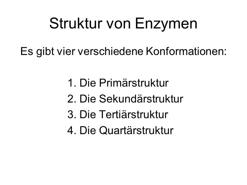 Struktur von Enzymen Es gibt vier verschiedene Konformationen: 1. Die Primärstruktur 2. Die Sekundärstruktur 3. Die Tertiärstruktur 4. Die Quartärstru