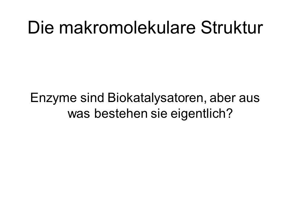 Die makromolekulare Struktur Versuch: In einen Dialyseschlauch wird gelöste Hefe (enthält Katalase) mit dem Farbstoff Malachitgrün gefüllt.