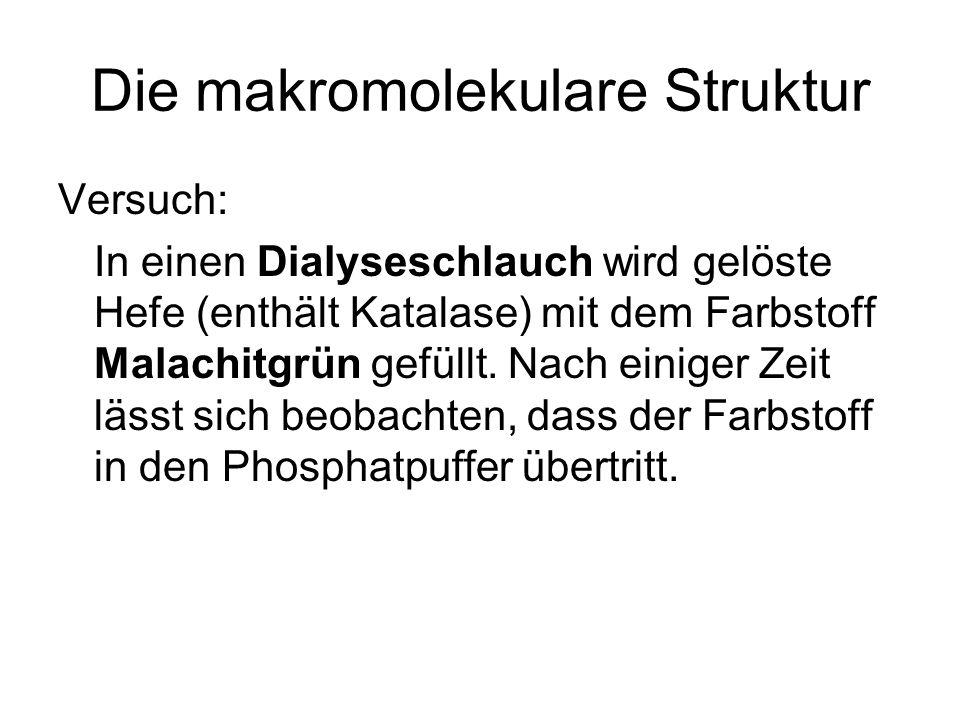 Die makromolekulare Struktur Versuch: In einen Dialyseschlauch wird gelöste Hefe (enthält Katalase) mit dem Farbstoff Malachitgrün gefüllt. Nach einig