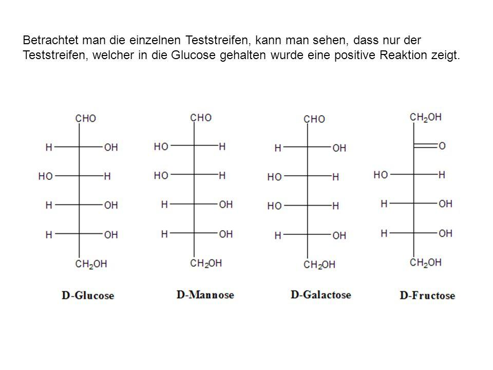 Betrachtet man die einzelnen Teststreifen, kann man sehen, dass nur der Teststreifen, welcher in die Glucose gehalten wurde eine positive Reaktion zeigt.