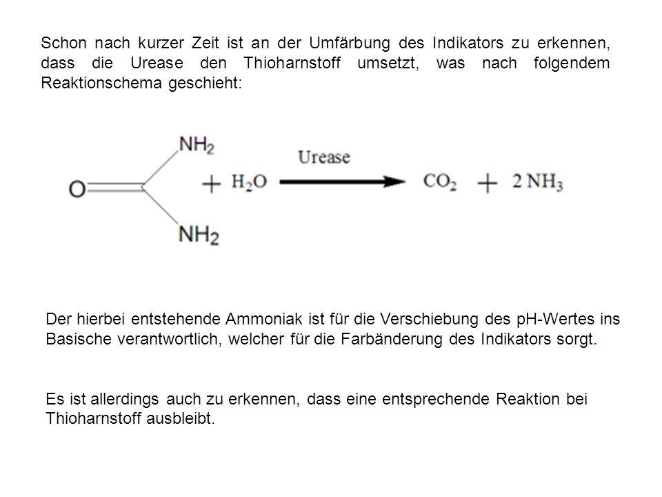 Schon nach kurzer Zeit ist an der Umfärbung des Indikators zu erkennen, dass die Urease den Thioharnstoff umsetzt, was nach folgendem Reaktionschema g