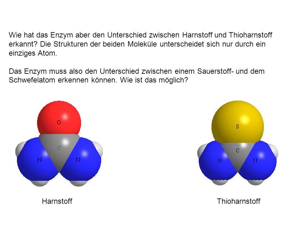Wie hat das Enzym aber den Unterschied zwischen Harnstoff und Thioharnstoff erkannt? Die Strukturen der beiden Moleküle unterscheidet sich nur durch e