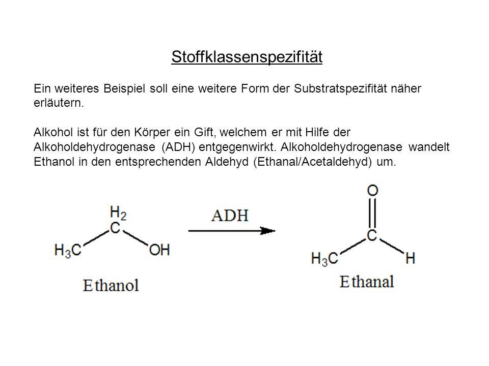 Stoffklassenspezifität Ein weiteres Beispiel soll eine weitere Form der Substratspezifität näher erläutern. Alkohol ist für den Körper ein Gift, welch
