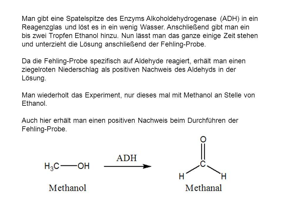 Man gibt eine Spatelspitze des Enzyms Alkoholdehydrogenase (ADH) in ein Reagenzglas und löst es in ein wenig Wasser. Anschließend gibt man ein bis zwe