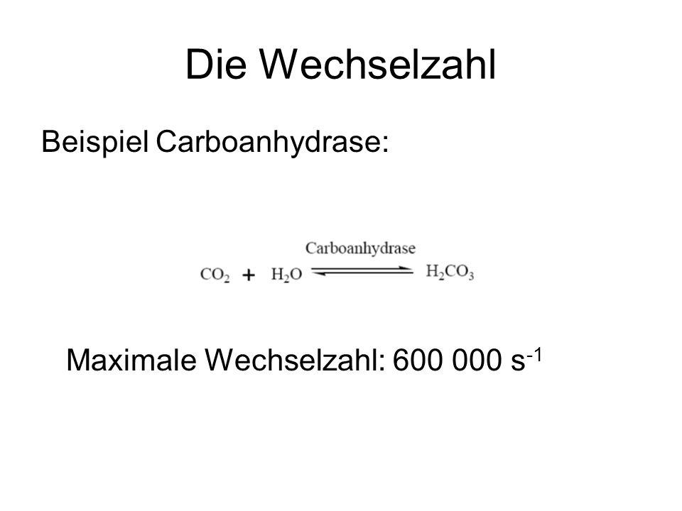 Die Wechselzahl Beispiel Carboanhydrase: Maximale Wechselzahl: 600 000 s -1