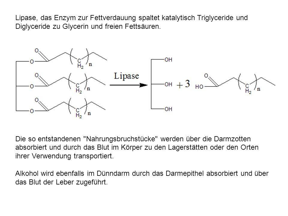 Lipase, das Enzym zur Fettverdauung spaltet katalytisch Triglyceride und Diglyceride zu Glycerin und freien Fettsäuren. Die so entstandenen