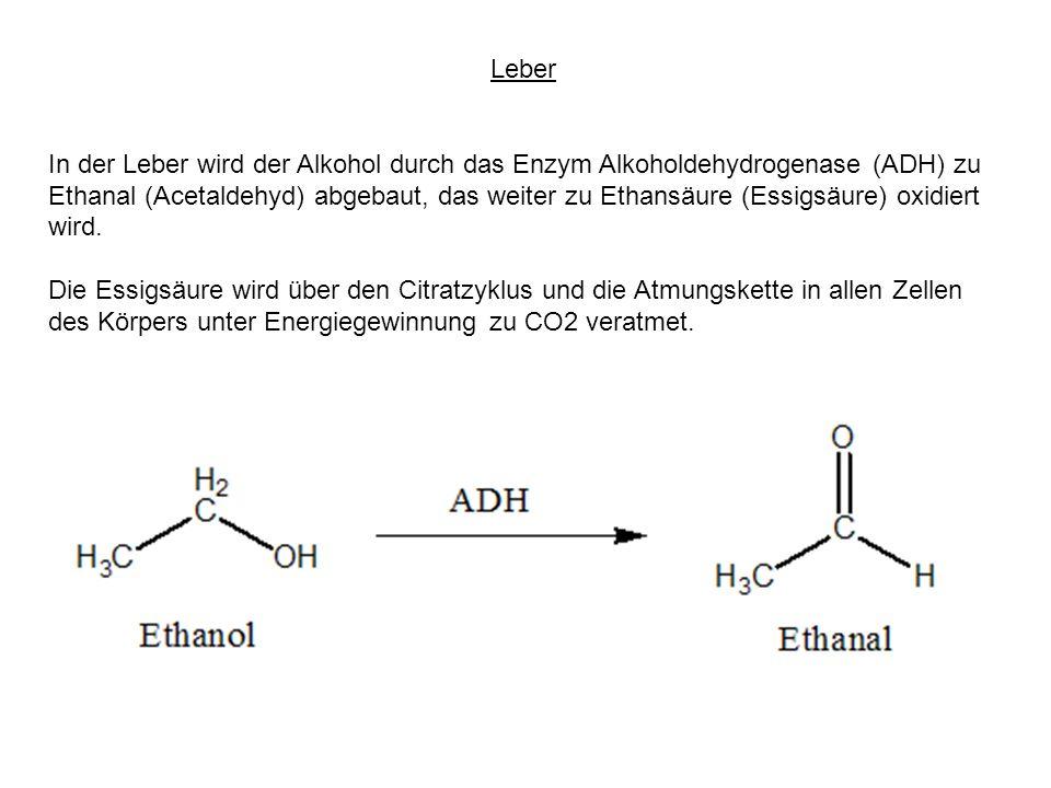 Leber In der Leber wird der Alkohol durch das Enzym Alkoholdehydrogenase (ADH) zu Ethanal (Acetaldehyd) abgebaut, das weiter zu Ethansäure (Essigsäure