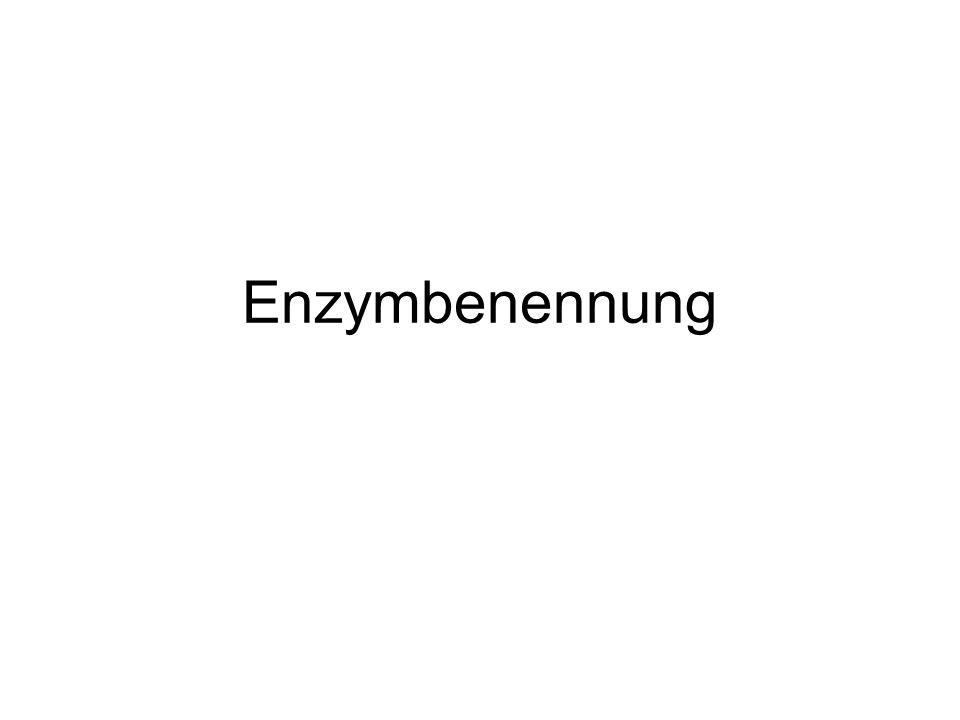 Gliederung 1.Wie kamen die Enzyme zu ihren Namen.2.Wie werden Enzyme systematisch genannt.