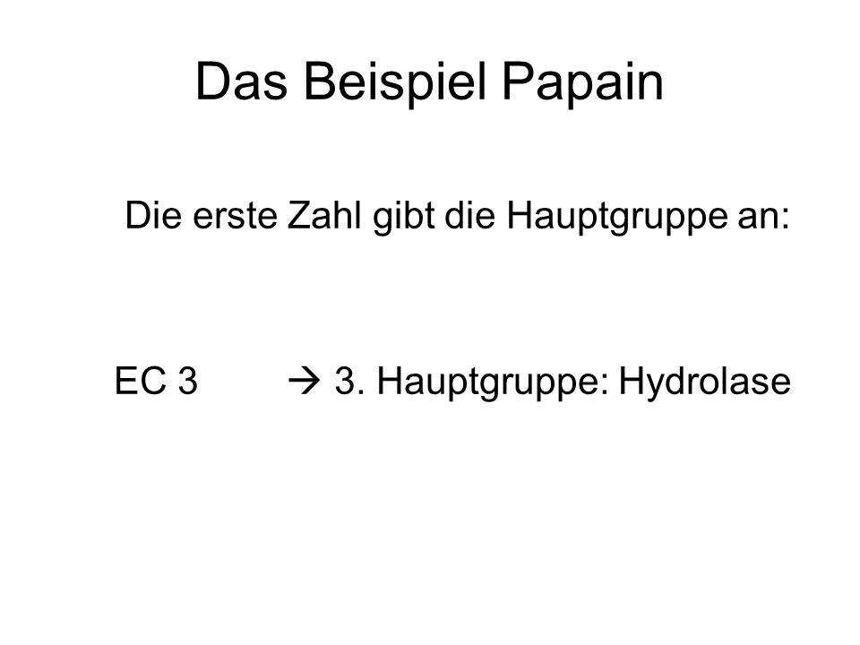 Das Beispiel Papain Die erste Zahl gibt die Hauptgruppe an: EC 3 3. Hauptgruppe: Hydrolase