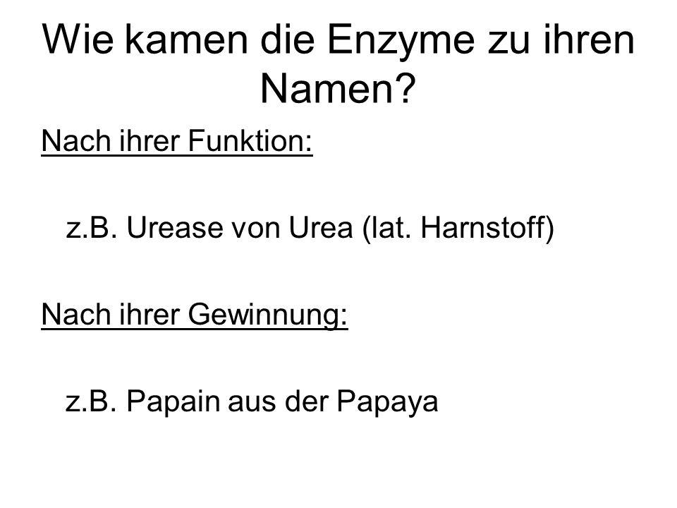 Wie kamen die Enzyme zu ihren Namen? Nach ihrer Funktion: z.B. Urease von Urea (lat. Harnstoff) Nach ihrer Gewinnung: z.B. Papain aus der Papaya