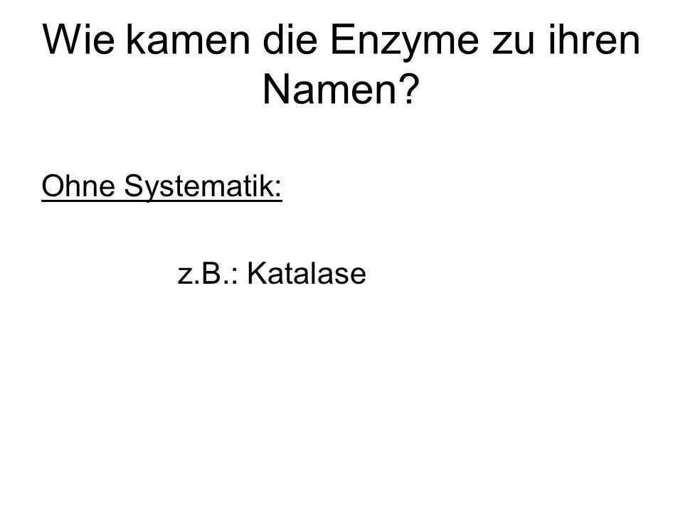 Wie kamen die Enzyme zu ihren Namen? Ohne Systematik: z.B.: Katalase