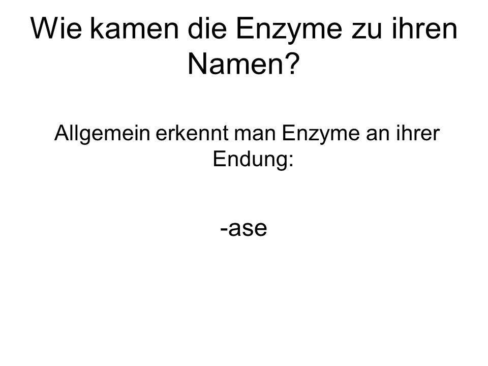 Wie kamen die Enzyme zu ihren Namen? Allgemein erkennt man Enzyme an ihrer Endung: -ase