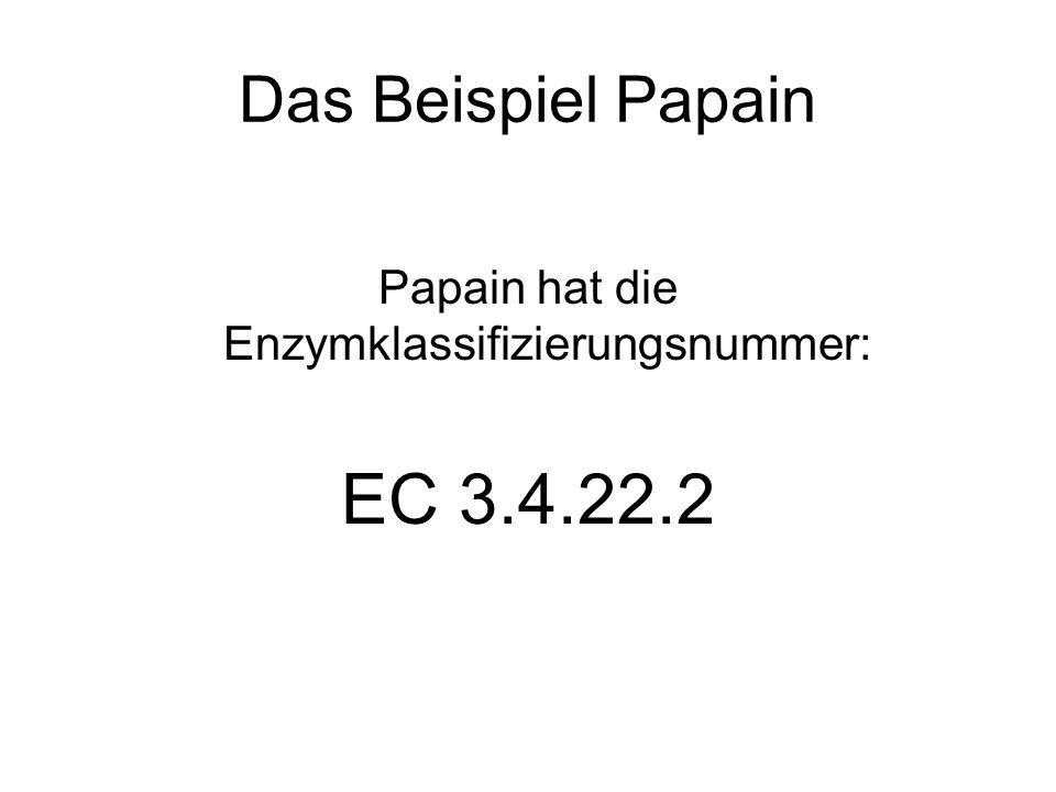 Das Beispiel Papain Papain hat die Enzymklassifizierungsnummer: EC 3.4.22.2