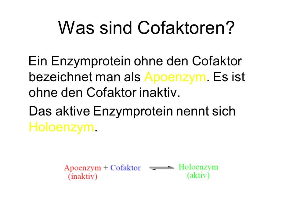 Was sind Cofaktoren? Ein Enzymprotein ohne den Cofaktor bezeichnet man als Apoenzym. Es ist ohne den Cofaktor inaktiv. Das aktive Enzymprotein nennt s