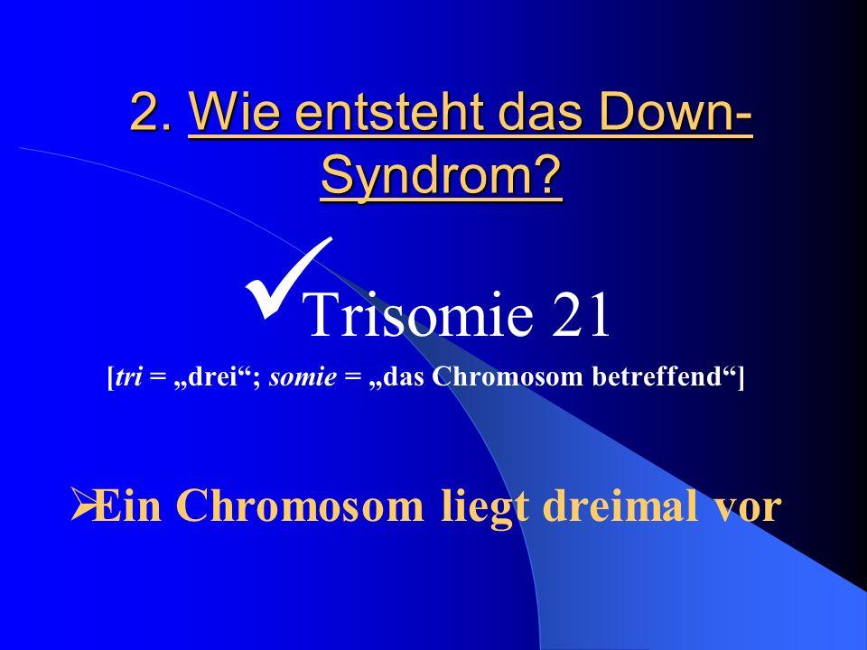 2. Wie entsteht das Down- Syndrom? Trisomie 21 [tri = drei; somie = das Chromosom betreffend] Ein Chromosom liegt dreimal vor