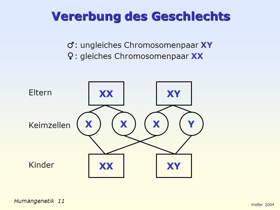 Weller 2004 Humangenetik 11 Vererbung des Geschlechts : ungleiches Chromosomenpaar XY : gleiches Chromosomenpaar XX XXXY Eltern XXXY Keimzellen XYXX K