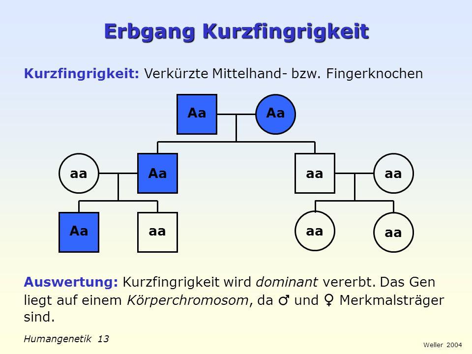 Weller 2004 Humangenetik 13 Erbgang Kurzfingrigkeit Kurzfingrigkeit: Verkürzte Mittelhand- bzw. Fingerknochen Aa aa Auswertung: Kurzfingrigkeit wird d