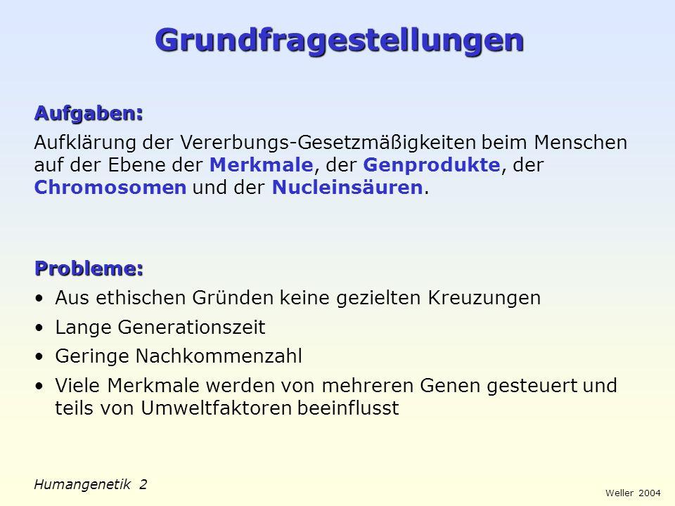 Weller 2004 Humangenetik 2 Grundfragestellungen Aufgaben : Aufklärung der Vererbungs-Gesetzmäßigkeiten beim Menschen auf der Ebene der Merkmale, der G