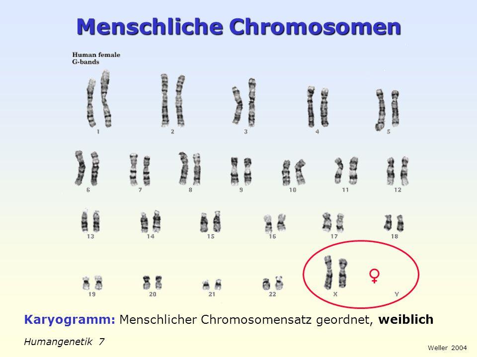 Weller 2004 Humangenetik 7 Menschliche Chromosomen Karyogramm: Menschlicher Chromosomensatz geordnet, weiblich