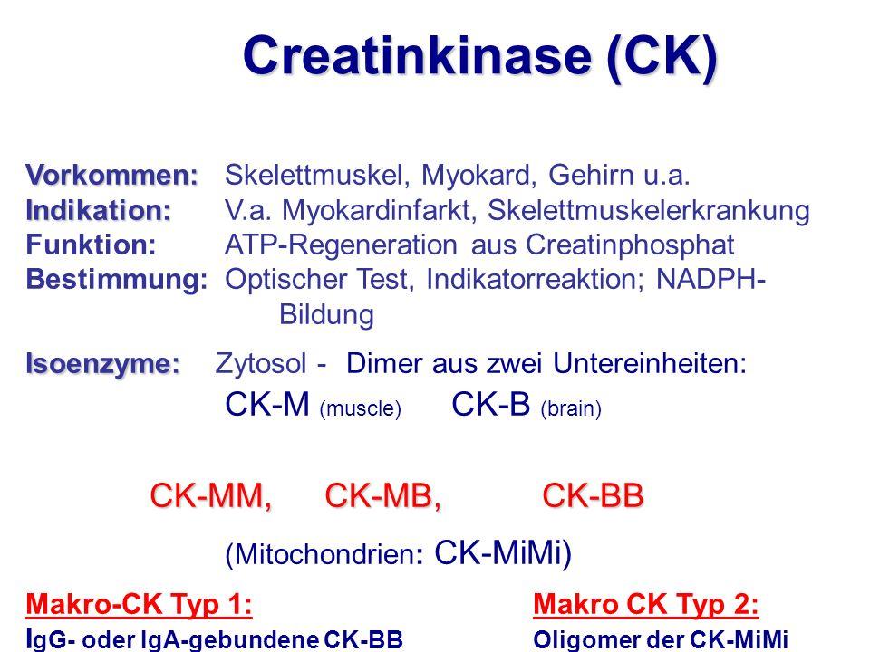 Vorkommen: Vorkommen:Skelettmuskel, Myokard, Gehirn u.a. Indikation: Indikation: V.a. Myokardinfarkt, Skelettmuskelerkrankung Funktion: ATP-Regenerati