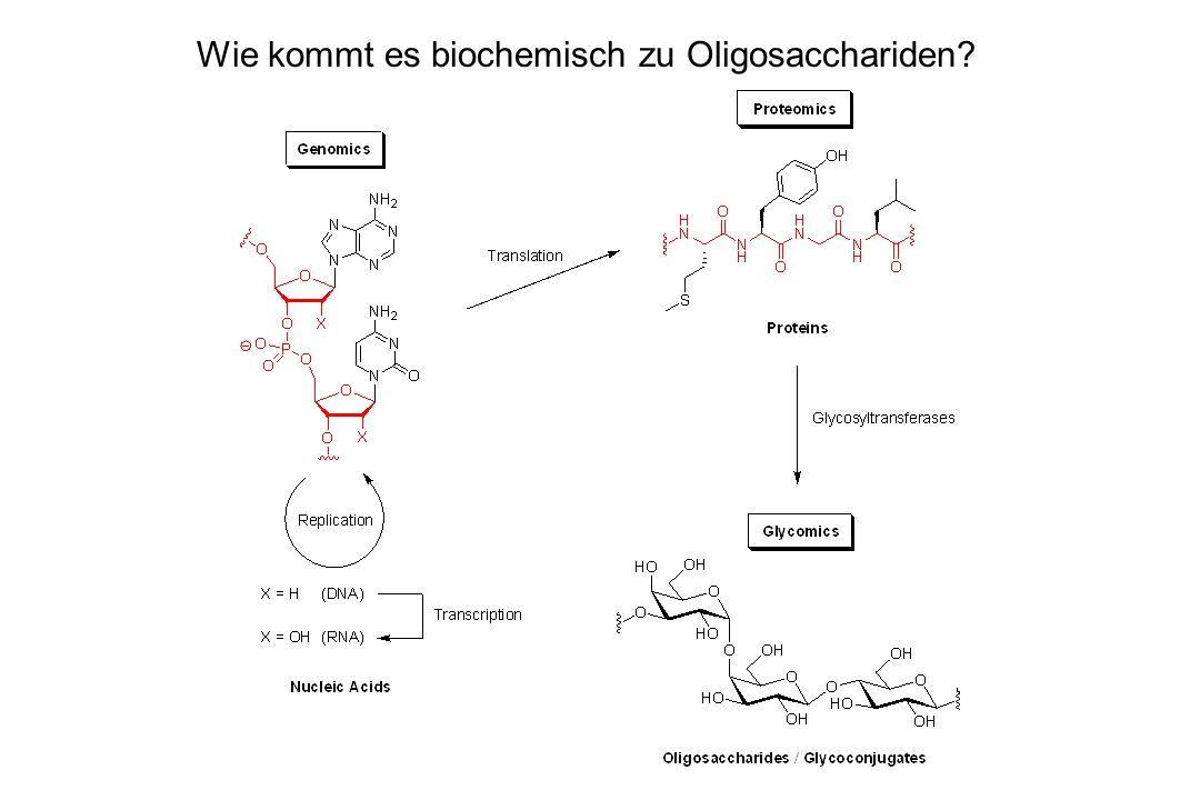 Wie kommt es biochemisch zu Oligosacchariden