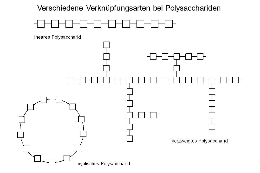 Verschiedene Verknüpfungsarten bei Polysacchariden