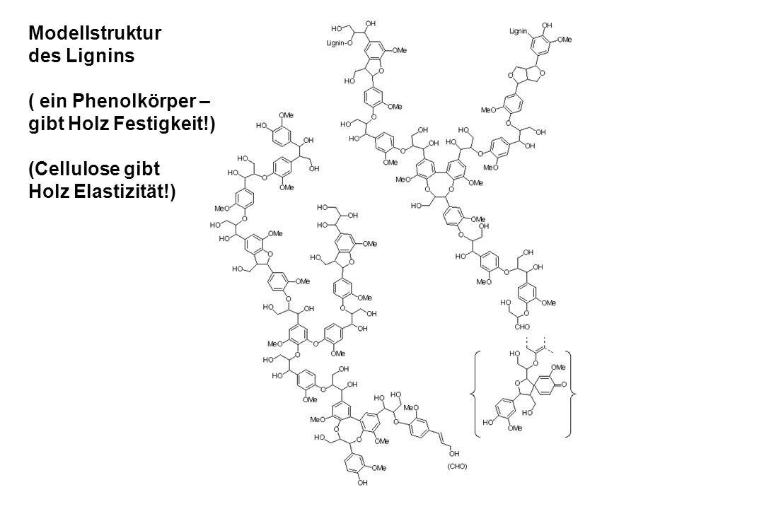 Modellstruktur des Lignins ( ein Phenolkörper – gibt Holz Festigkeit!) (Cellulose gibt Holz Elastizität!)