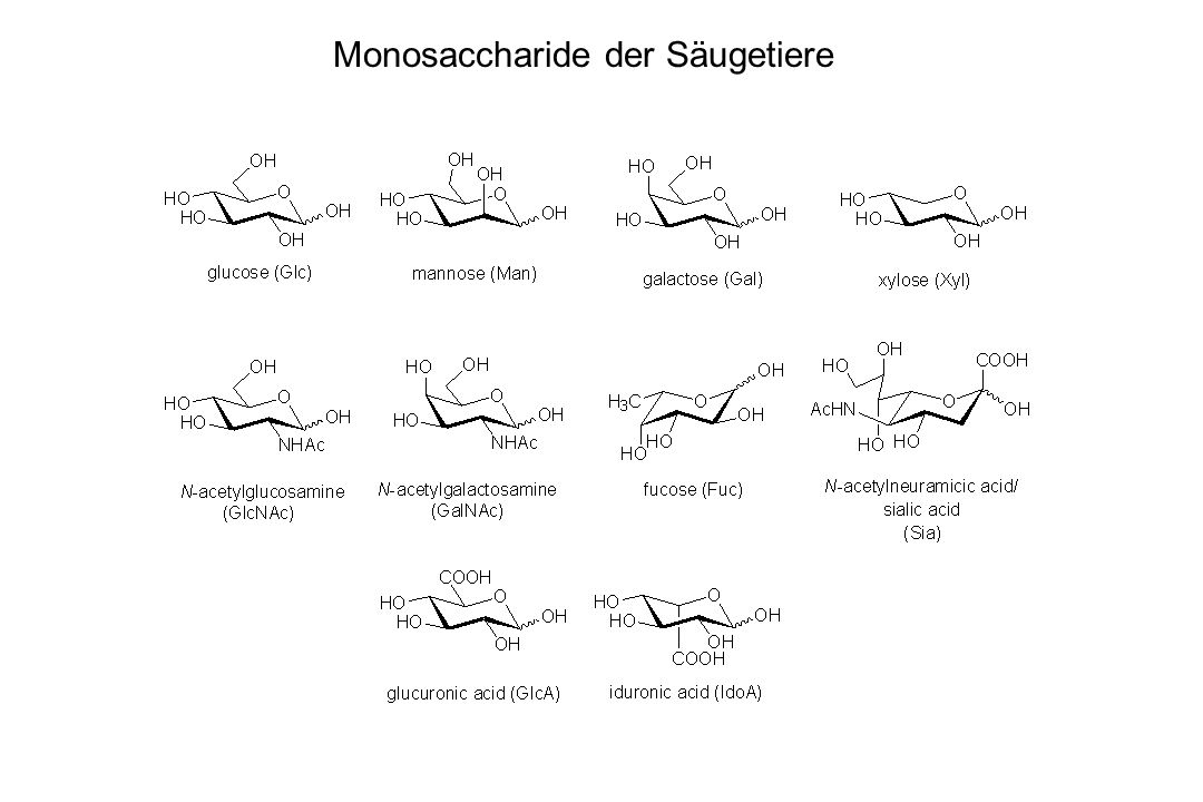 Beispiele bakterieller Monosaccharide