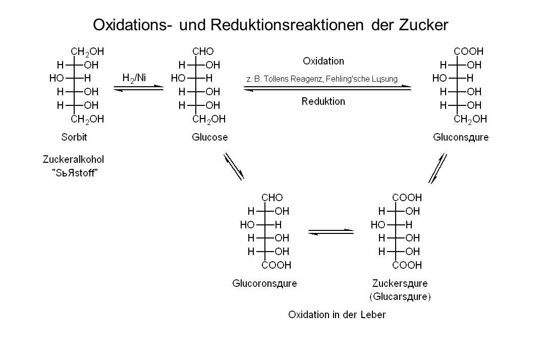 Oxidations- und Reduktionsreaktionen der Zucker