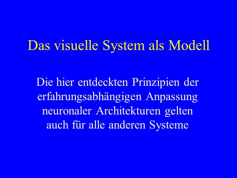 Das visuelle System als Modell Die hier entdeckten Prinzipien der erfahrungsabhängigen Anpassung neuronaler Architekturen gelten auch für alle anderen