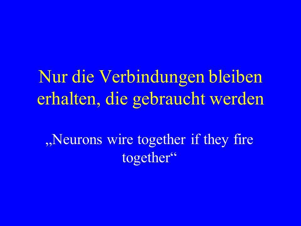 Nur die Verbindungen bleiben erhalten, die gebraucht werden Neurons wire together if they fire together