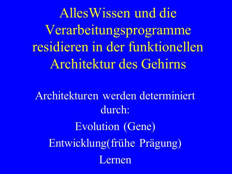 AllesWissen und die Verarbeitungsprogramme residieren in der funktionellen Architektur des Gehirns Architekturen werden determiniert durch: Evolution