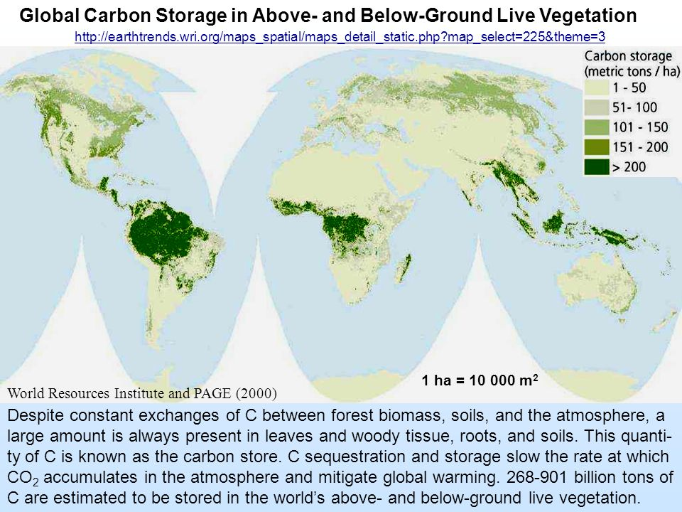 Global Carbon Storage in Above- and Below-Ground Live Vegetation Despite constant exchanges of C between forest biomass, soils, and the atmosphere, a