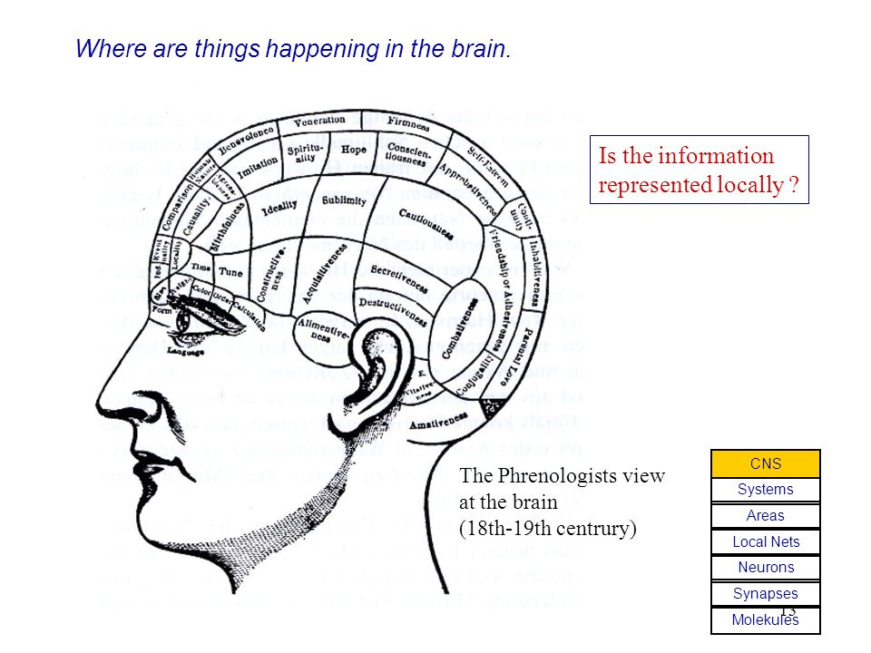 13 Where are things happening in the brain.Is the information represented locally .