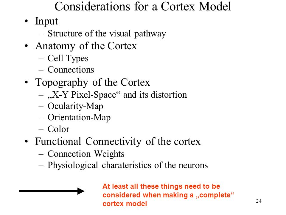 24 Considerations for a Cortex Model Input –Structure of the visual pathway Anatomy of the Cortex –Cell Types –Connections Topography of the Cortex –X-Y Pixel-Space and its distortion –Ocularity-Map –Orientation-Map –Color Functional Connectivity of the cortex –Connection Weights –Physiological charateristics of the neurons At least all these things need to be considered when making a complete cortex model