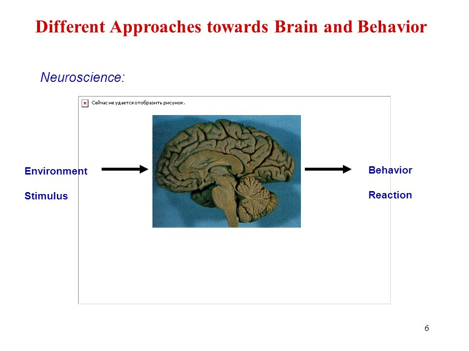 6 Neuroscience: Environment Stimulus Behavior Reaction Different Approaches towards Brain and Behavior