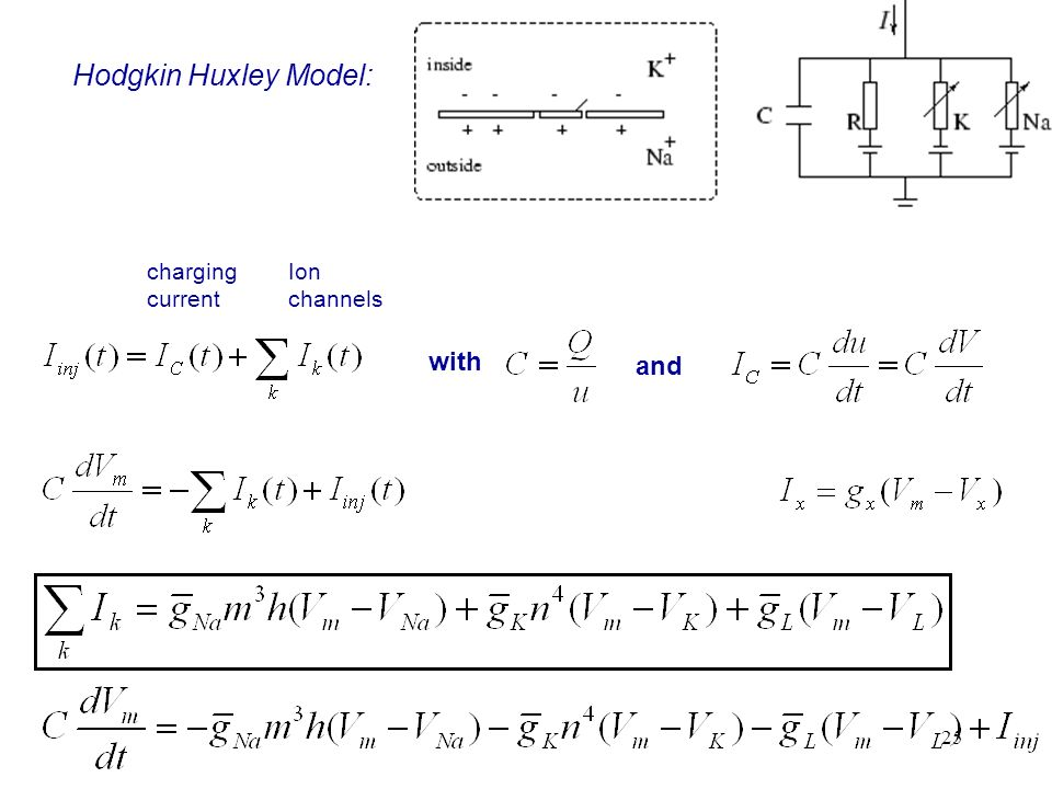 25 Hodgkin Huxley Model: with and charging current Ion channels