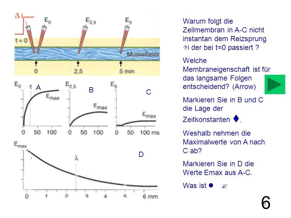 3 A B Warum folgt die Zellmembran in A-C nicht instantan dem Reizsprung i der bei t=0 passiert ? Welche Membraneigenschaft ist für das langsame Folgen