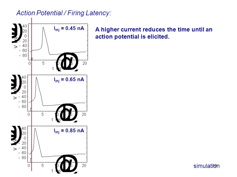 30 Action Potential / Firing Latency: I inj = 0.85 nA I inj = 0.65 nA A higher current reduces the time until an action potential is elicited. I inj =