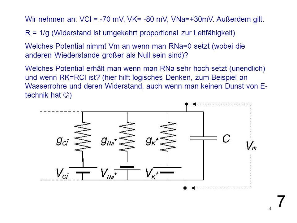 4 Wir nehmen an: VCl = -70 mV, VK= -80 mV, VNa=+30mV. Außerdem gilt: R = 1/g (Widerstand ist umgekehrt proportional zur Leitfähigkeit). Welches Potent