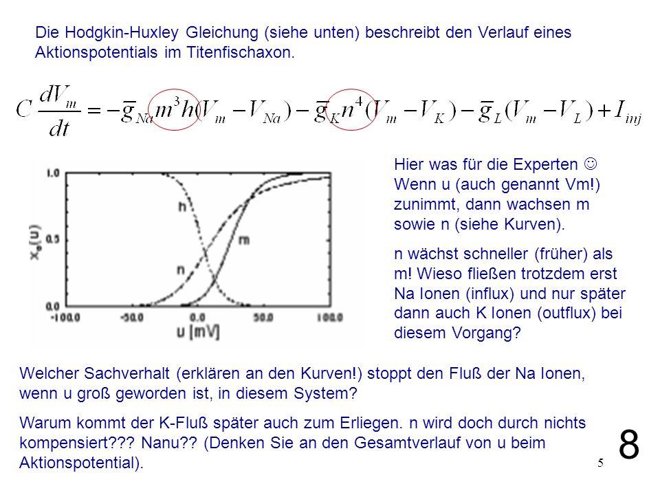 5 Hier was für die Experten Wenn u (auch genannt Vm!) zunimmt, dann wachsen m sowie n (siehe Kurven). n wächst schneller (früher) als m! Wieso fließen