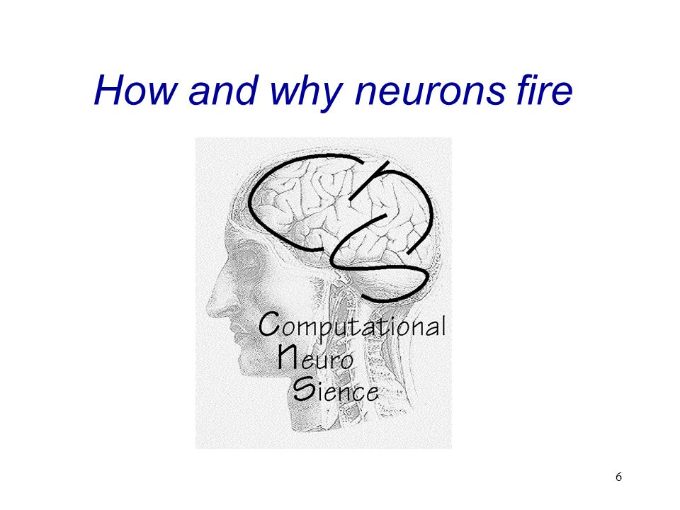7 The Neuron Contents: Structure Electrical Membrane Properties Ion Channels Actionpotential Signal Propagation Synaptic Transmission Neurophysiological Background