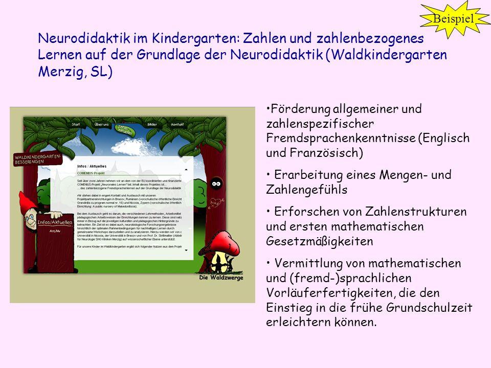 Neurodidaktik im Kindergarten: Zahlen und zahlenbezogenes Lernen auf der Grundlage der Neurodidaktik (Waldkindergarten Merzig, SL) Förderung allgemein