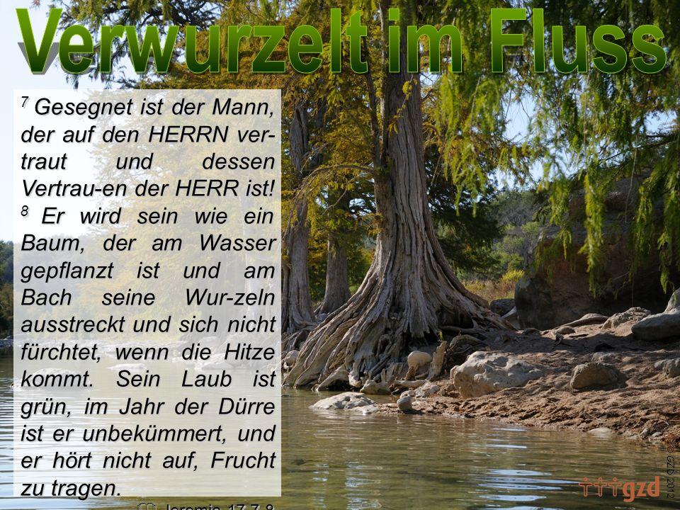 7 Gesegnet ist der Mann, der auf den HERRN ver- traut und dessen Vertrau-en der HERR ist! 8 Er wird sein wie ein Baum, der am Wasser gepflanzt ist und