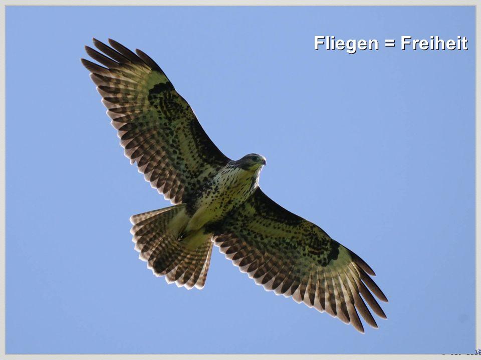 Fliegen = Freiheit