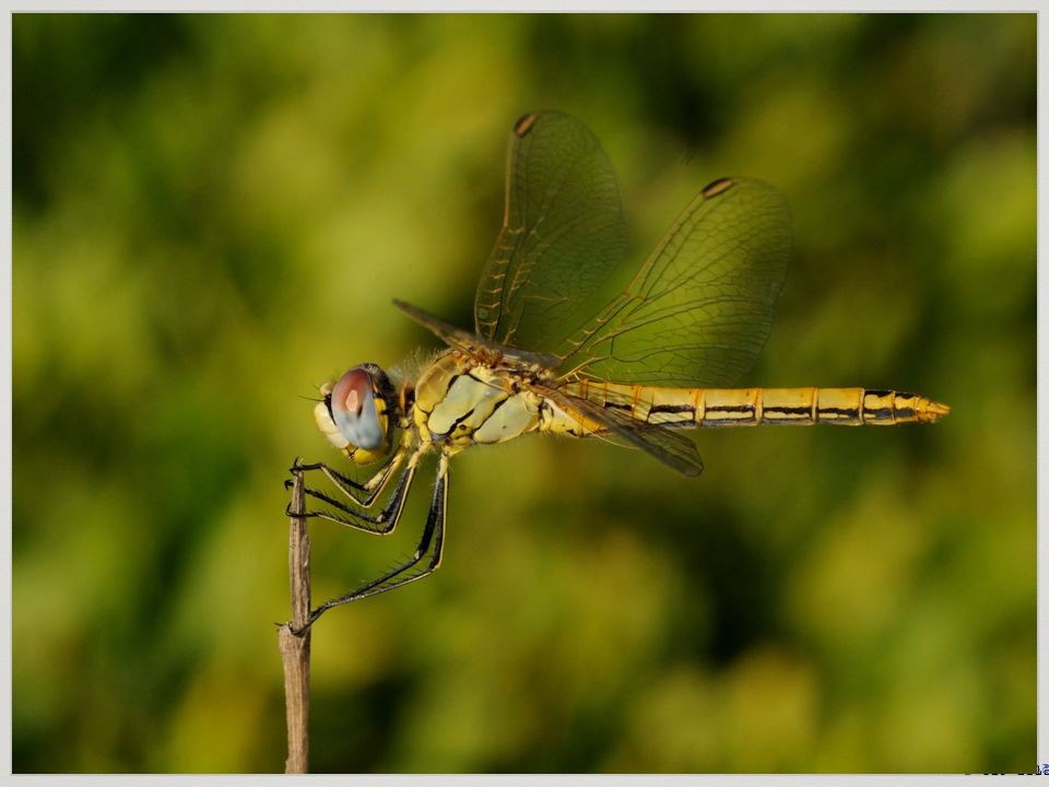 5380 Libellen-Arten = Vielfalt