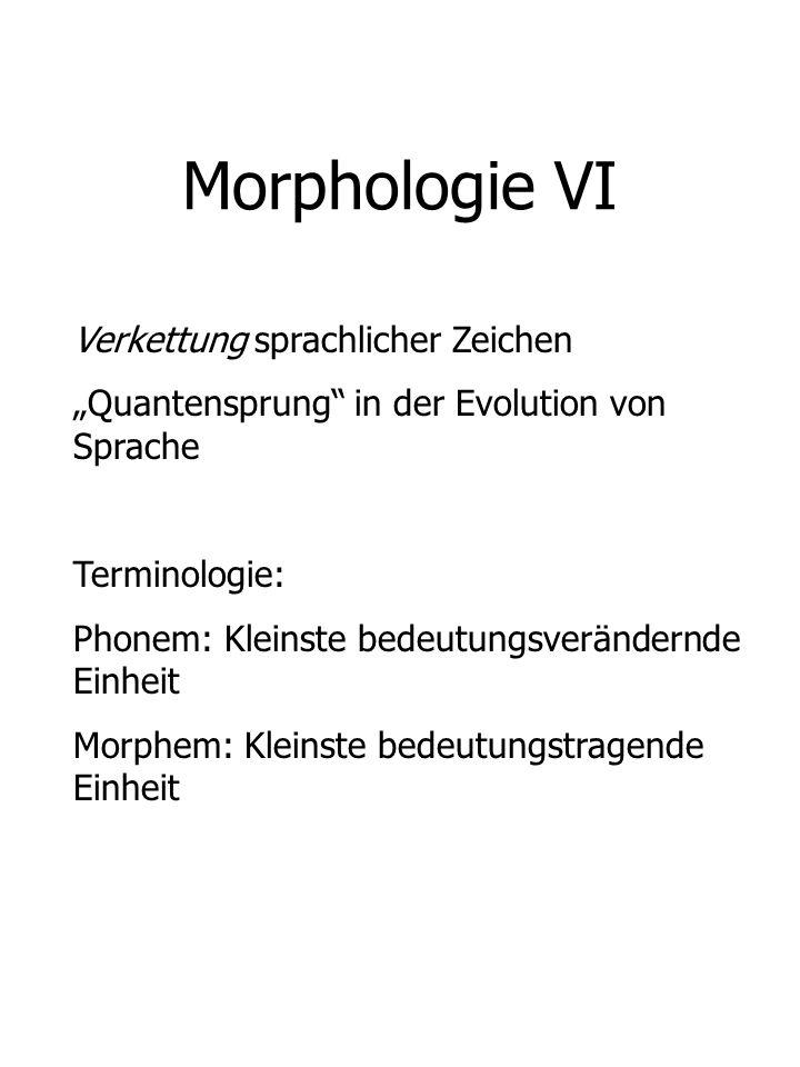 Morphologie VI Verkettung sprachlicher Zeichen Quantensprung in der Evolution von Sprache Terminologie: Phonem: Kleinste bedeutungsverändernde Einheit