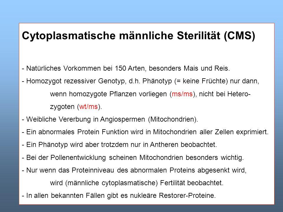 Cytoplasmatische männliche Sterilität (CMS) - Natürliches Vorkommen bei 150 Arten, besonders Mais und Reis. - Homozygot rezessiver Genotyp, d.h. Phäno