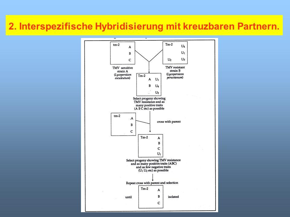 2. Interspezifische Hybridisierung mit kreuzbaren Partnern.